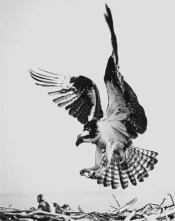 Элиот Портер: фотограф раскрасивший мир. Изображение № 19.