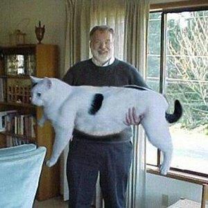 Тест: отличите  настоящее животное  от вымышленного. Изображение № 59.