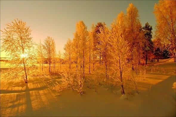 Изображение 15. Выходные в шведском лесу.. Изображение № 15.