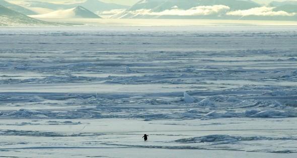 Антарктические сны. Красоты южного полюса. Изображение № 10.