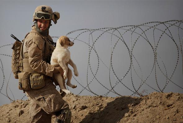 Афганистан. Военная фотография. Изображение № 131.