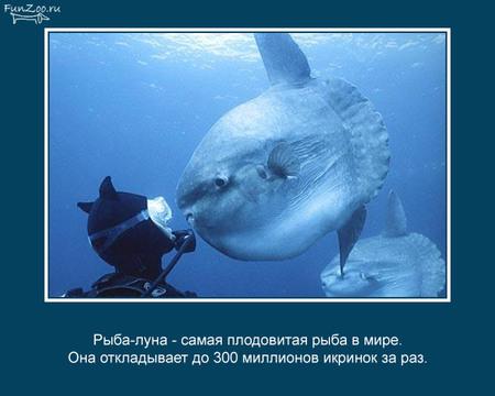 Животные иинтересные факты оних. Изображение № 19.