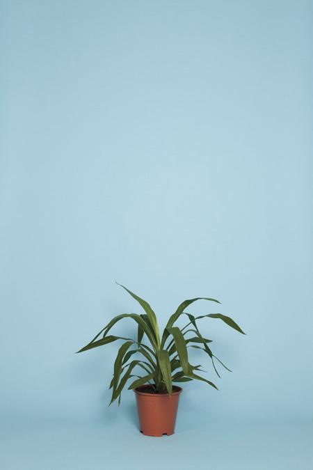 Люк Стефенсон, фотограф. Изображение №22.