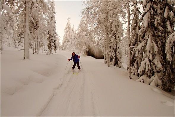 Изображение 8. Выходные в шведском лесу.. Изображение № 8.