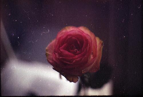 Изображение 24. Никогда не надо слушать, что говорят цветы. Надо просто смотреть на них и дышать их ароматом... Изображение № 24.