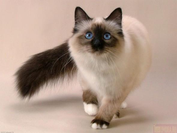 Кошки в интерьере. Изображение № 4.