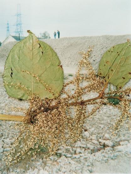 Фото-гербарий. Изображение № 10.