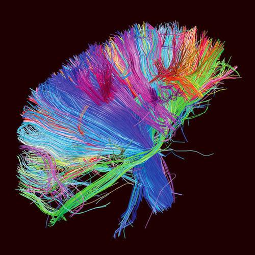 База данных: Как превратить информацию в искусство. Изображение № 2.