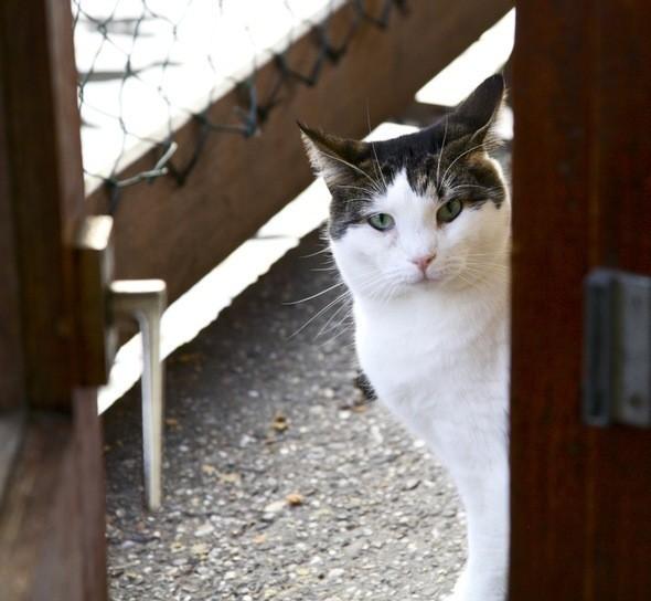Кот с плавучего приюта бездомных кошек de Poezenbot. Изображение № 39.