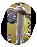 Некролог: Кот умер! Даздравствует кот!. Изображение № 6.