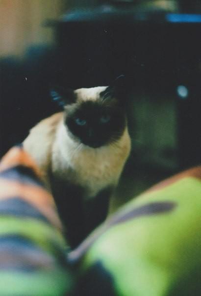 О кошках и подушках. Изображение № 3.