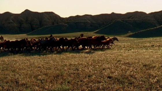 «Дикое поле». Изображение № 1.