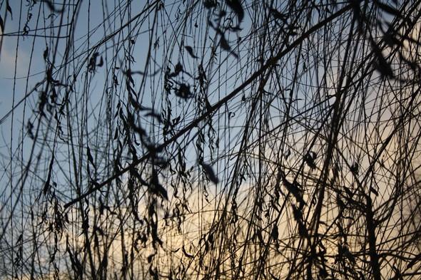Голые ветви. Изображение № 3.