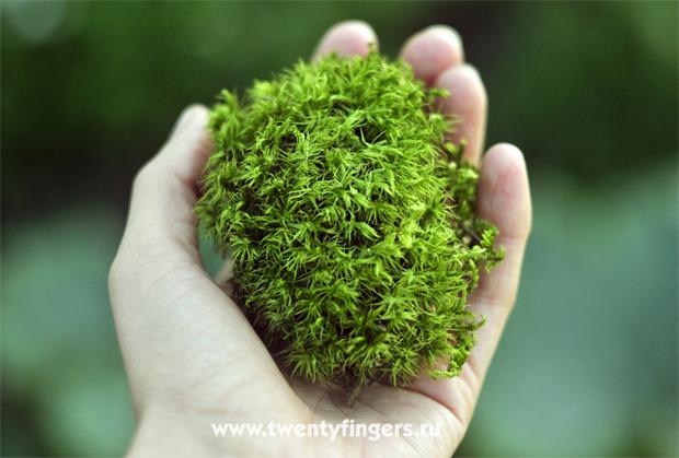 Вечнозеленый маленький мир.. Изображение № 3.