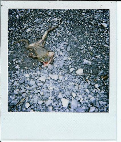 Animals Dead. Изображение № 7.