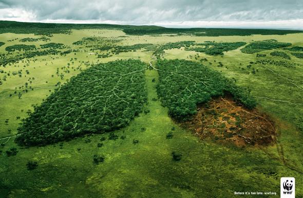 Всемирный фонд дикой природы: заживую планету. Изображение № 34.