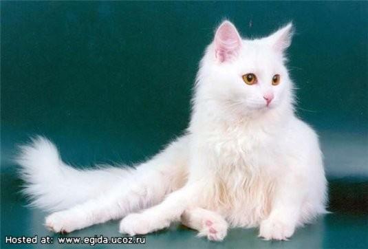 Кошки в интерьере. Изображение № 9.
