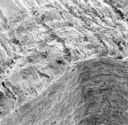 Клеточная структура березы (второе место по мнению жюри). Изображение № 3.