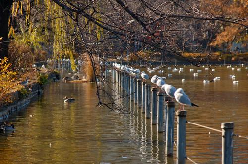Изображение 51. 7 лучших городских парков мира.. Изображение № 12.