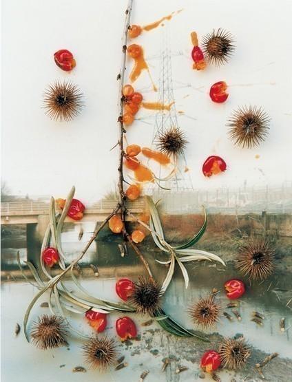 Фото-гербарий. Изображение № 25.