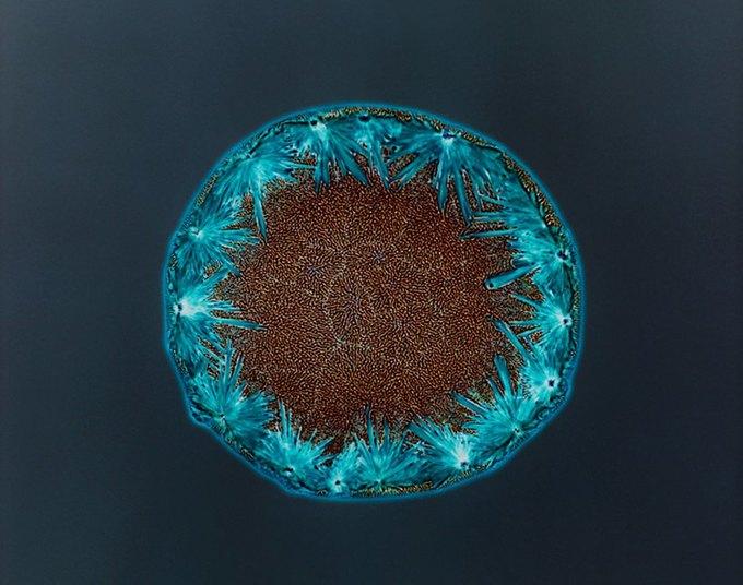 Кетамин. Изображение № 8.