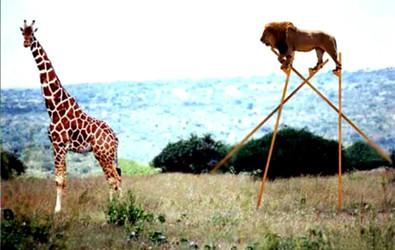 В мире животных: Герои «Мадагаскара» в мемах, рекламе и видеороликах. Изображение № 15.