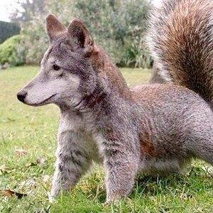 Тест: отличите  настоящее животное  от вымышленного. Изображение № 89.