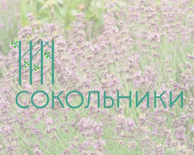 Студентка МГУП выиграла конкурс на лучший фирстиль «Сокольников». Изображение № 1.