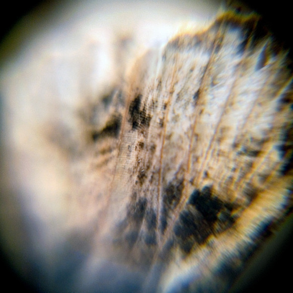 Morphology. Изображение № 14.