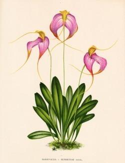Глянцевые орхидеи: слухи, сплетни, комментарии. Изображение № 12.