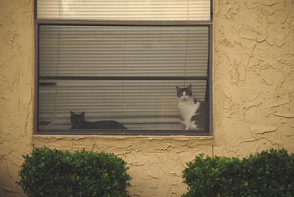 Cat. Window. Изображение № 16.