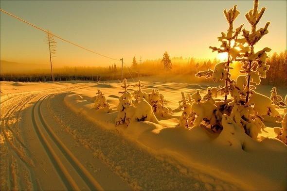 Изображение 13. Выходные в шведском лесу.. Изображение № 13.