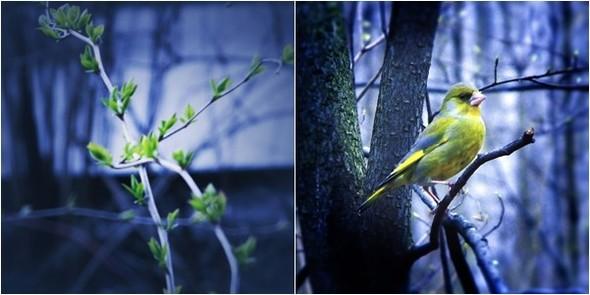 Весна в лесу. Изображение № 4.