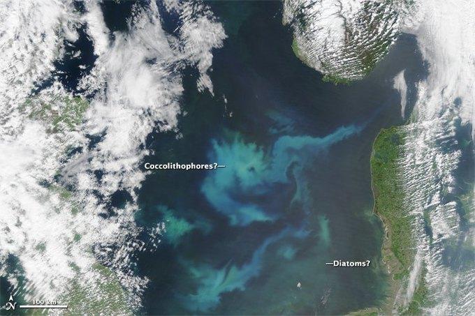 Цветение планктона в море показали со спутника. Изображение № 1.