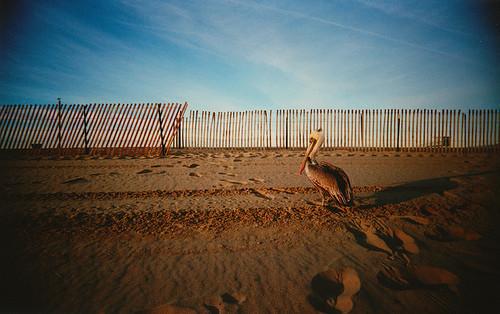 Фотограф Aaron Feaver. Изображение № 11.