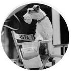 Кинодайджест: Байопик Стива Джобса, «Тонкий человек» с Деппом. Изображение № 4.