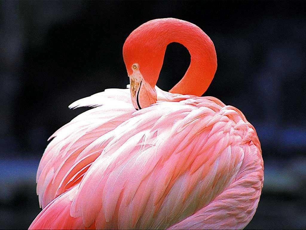 Розовый фламинго. Изображение № 40.