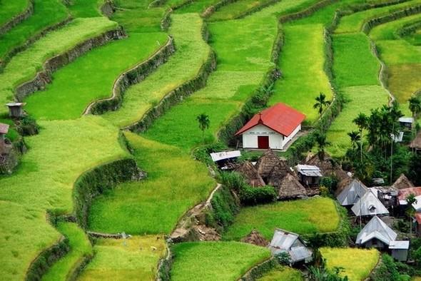 Где рис сажают тысячи лет…. Изображение № 1.