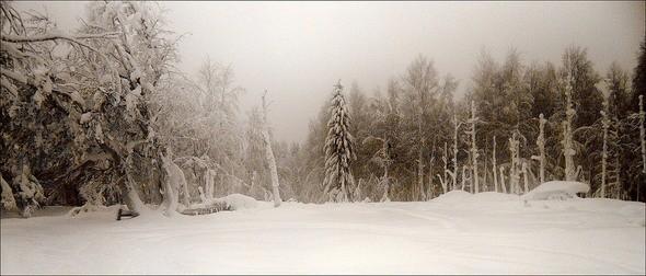 Изображение 34. Выходные в шведском лесу.. Изображение № 34.