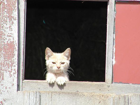 Cat. Window. Изображение № 2.