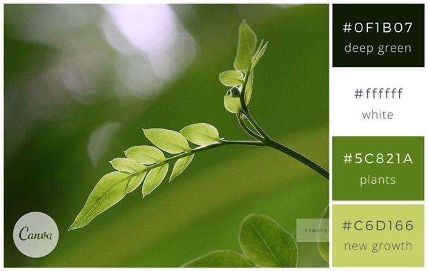 Сервис Canva предложил 100 удачных сочетаний цветов. Изображение № 24.