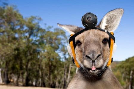 Google запускает проект Google Street Roo в Австралии. Изображение № 1.