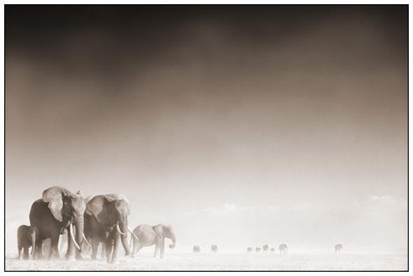 МояАфрика. Изображение № 8.