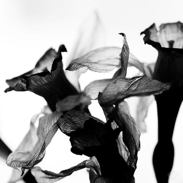Фотограф Тея Савельева. Изображение № 11.