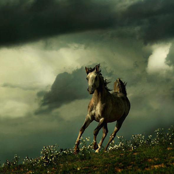 Фотографии лошадей Wojtek Kwiatkowski. Изображение № 7.