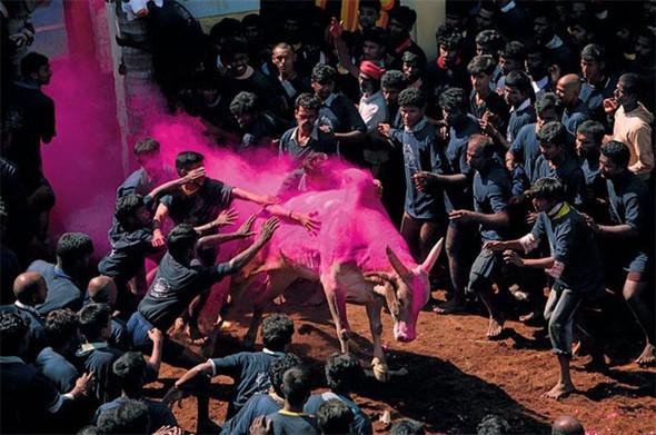 Лучшие снимки от National Geographic. Изображение № 8.