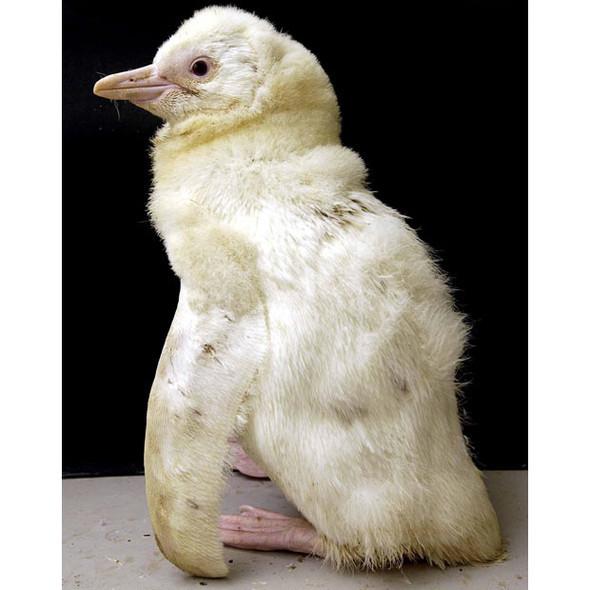 Животные-альбиносы. Изображение № 18.