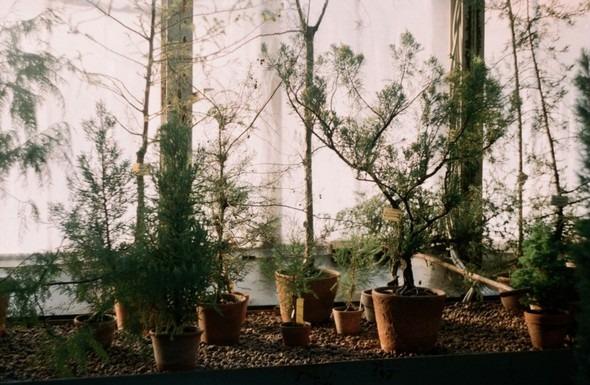 Прогулка по Ботаническому саду. Изображение № 9.