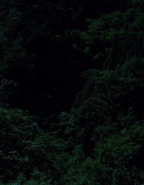 Темный лесКейты Сигиуры. Изображение № 4.