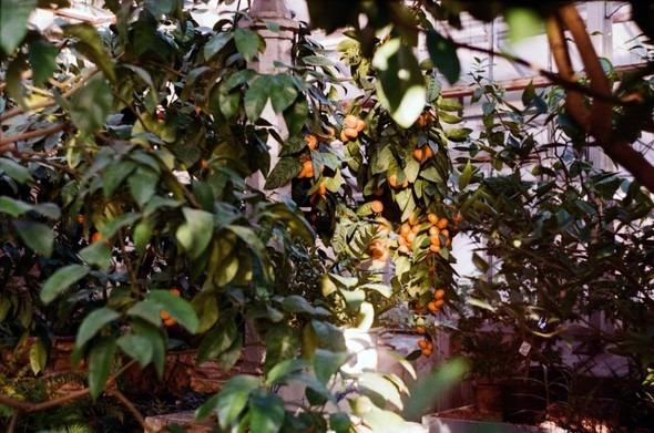 Прогулка по Ботаническому саду. Изображение № 18.